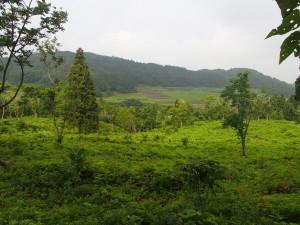 会津若松市内にあるうるし植栽林です。