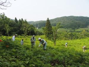 下草刈り作業②