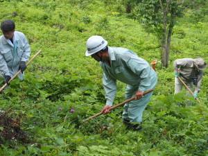 下草刈り作業①
